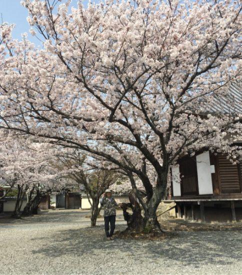 春のうら〜ら〜の二日間